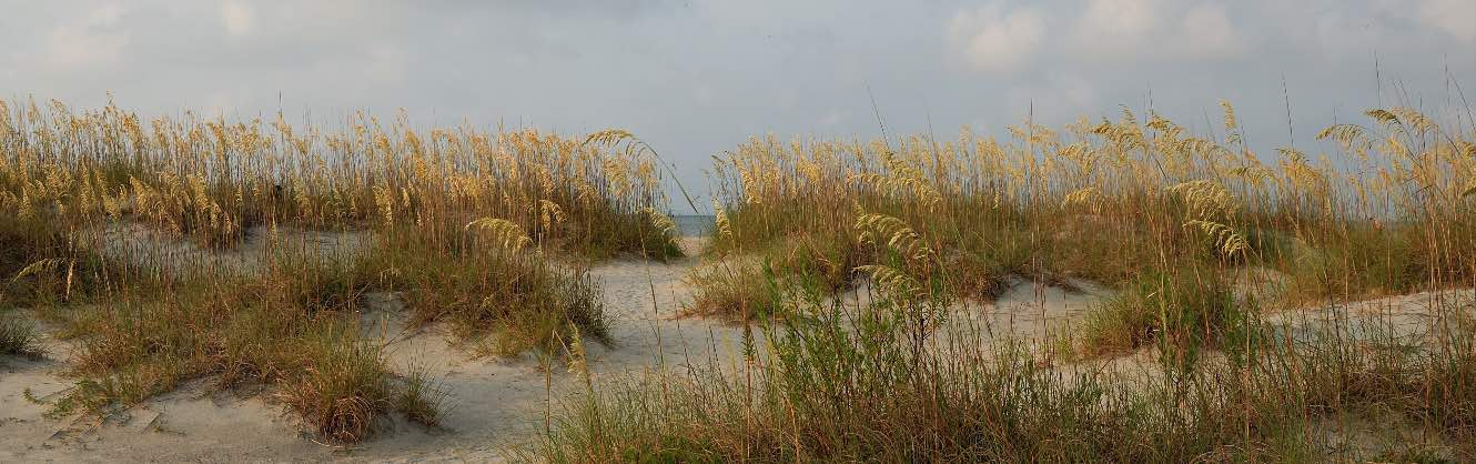 Dunes and grasses bordering on a beach.