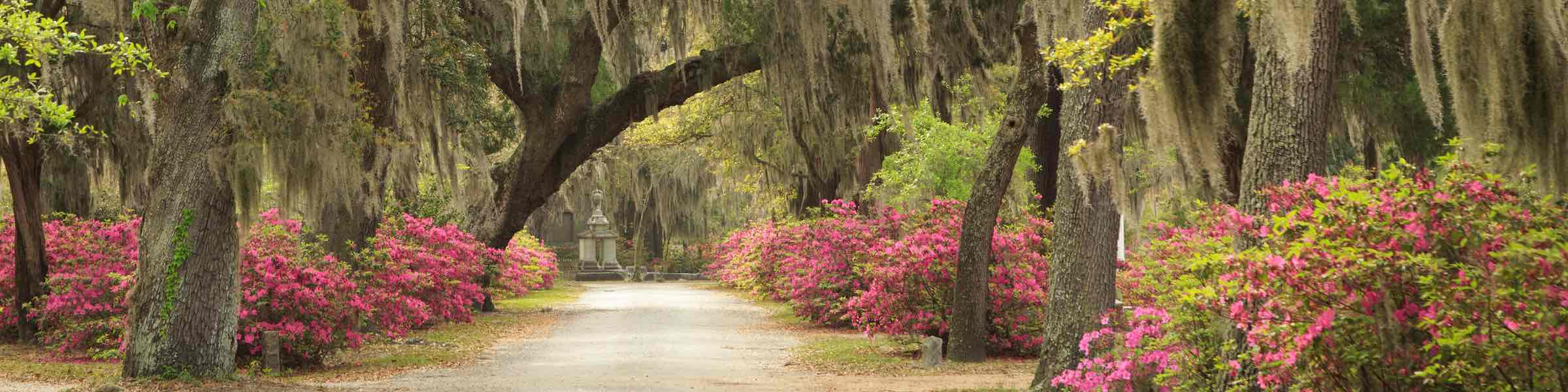 An azalea-and-oak-lined avenue in Bonaventure Cemetery, Savannah, GA.