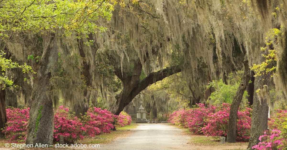 Bonaventure Cemetery Savannah Ga History Amp Highlights