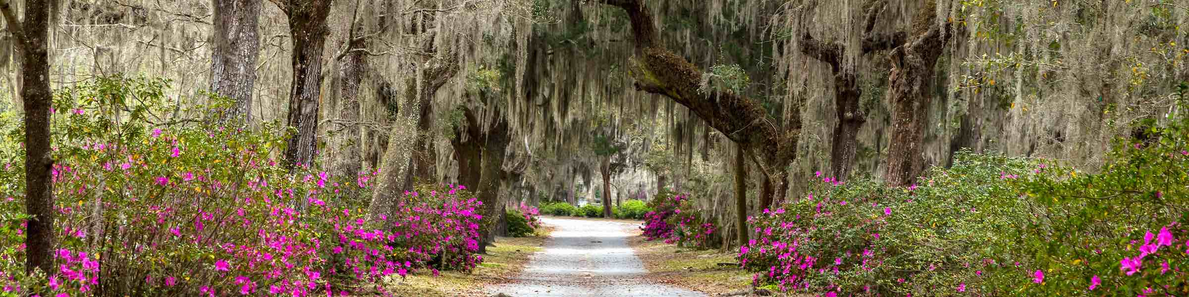 Live oaks and azaleas along a road through Bonaventure Cemetery, Savannah, GA.
