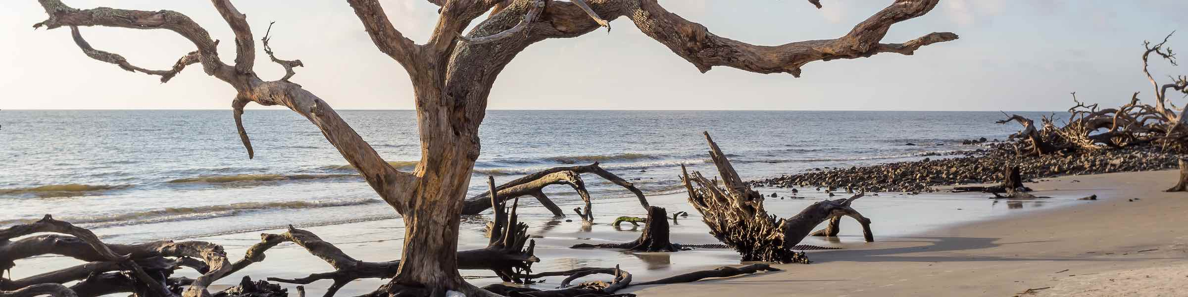 A dead tree in the surf at Jekyll Island's Driftwood Beach.