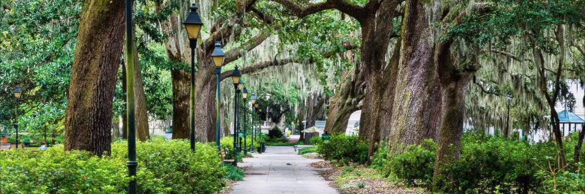 A view of one of the walks in Savannah's Forsyth Park.