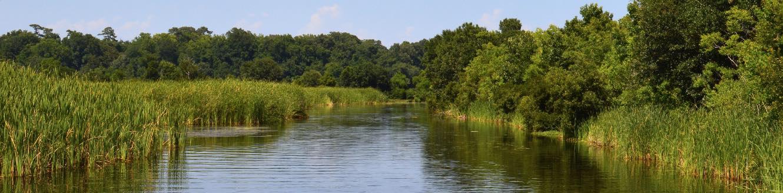 View of a creek winding through a reedy marsh.