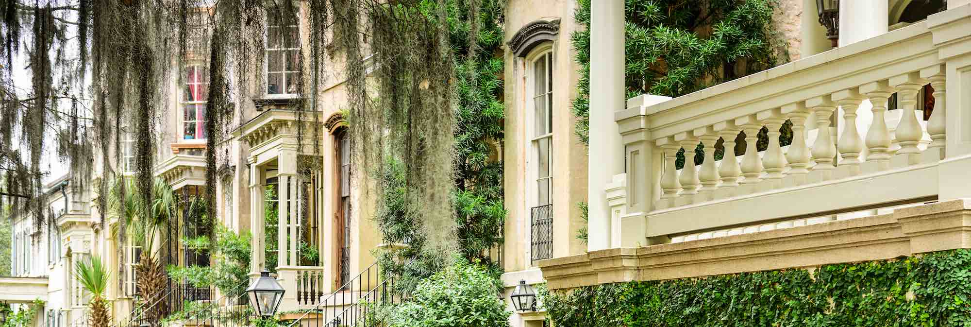 Spanish moss hanging in front of a row of historic townhouses in Savannah, GA.