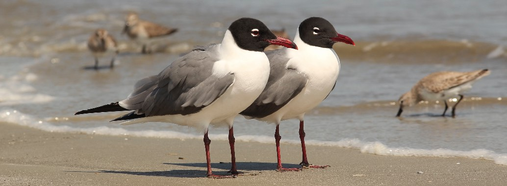 A pair of gulls on the beach.