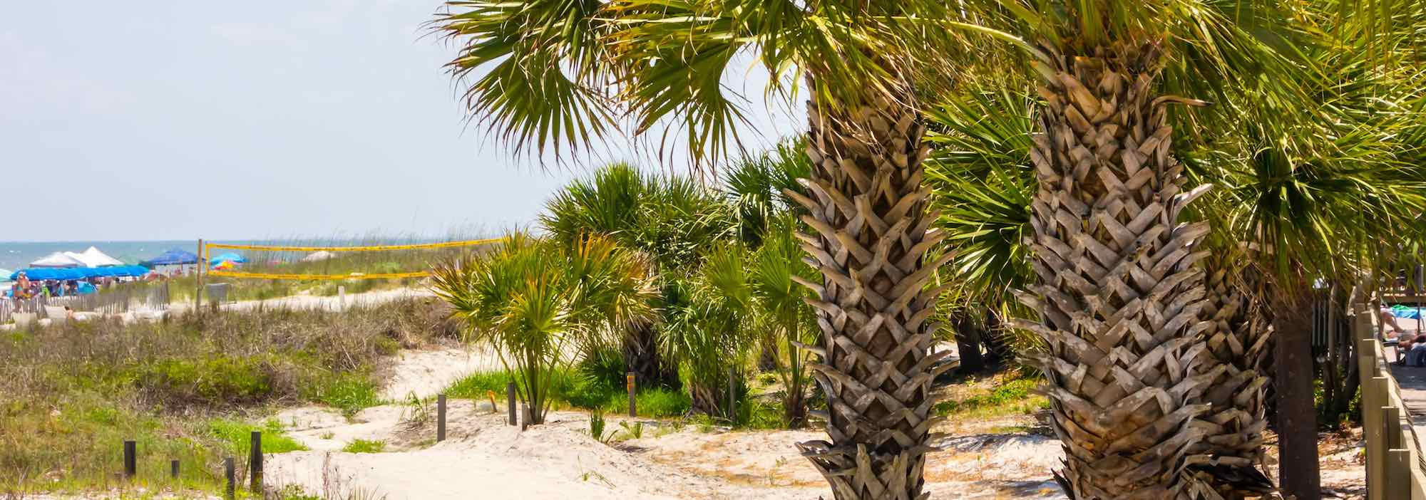 Palm trees on the beach front at Tybee Island, GA.
