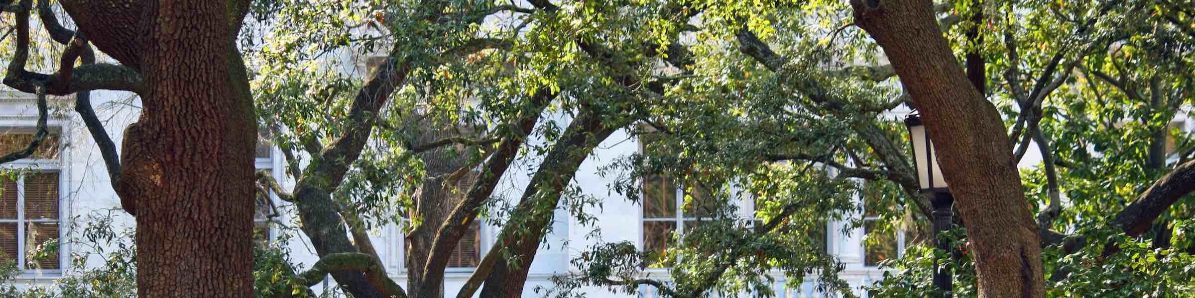 Leafy trees in Wright Square, Savannah, GA.